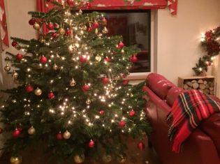 christmas tree buying tips
