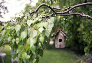 create a fun outdoor environment for garden make a bird feeder