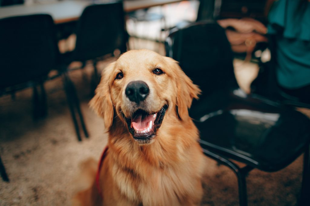 Top 5 healthy and happy ways to save your pooch from the blues!